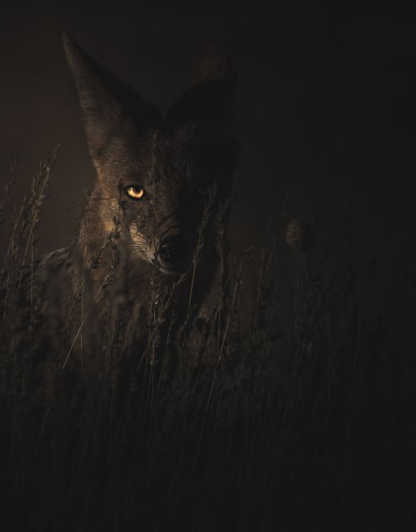 Wild animal in dark