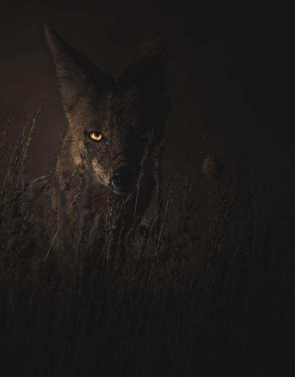 Wild animal in dark
